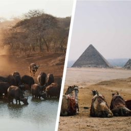 Africas 7GB 24 Days + FREE eSIM