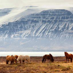 Iceland 7GB 24 Days + FREE eSIM