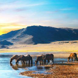 Mongolia 7GB 15 Days + FREE eSIM