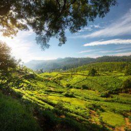 Sri Lanka 7GB 24 Days + FREE eSIM